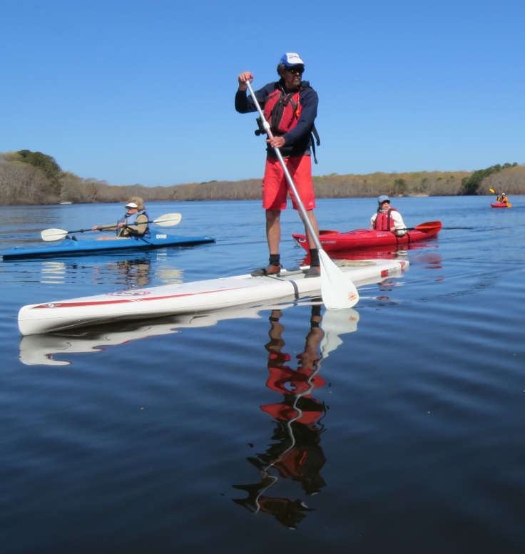SUP offers a great vantage point to spot wildlife beneath the surface of the water.