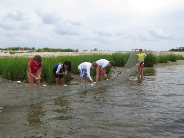 Students inspect fish caught in a tidal creek using a seine net.
