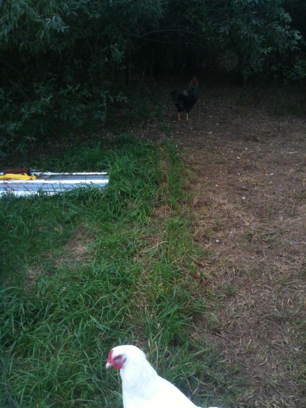 fence-line-grass