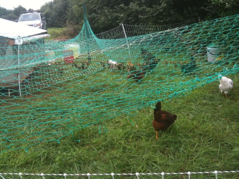 hawk-protection-net